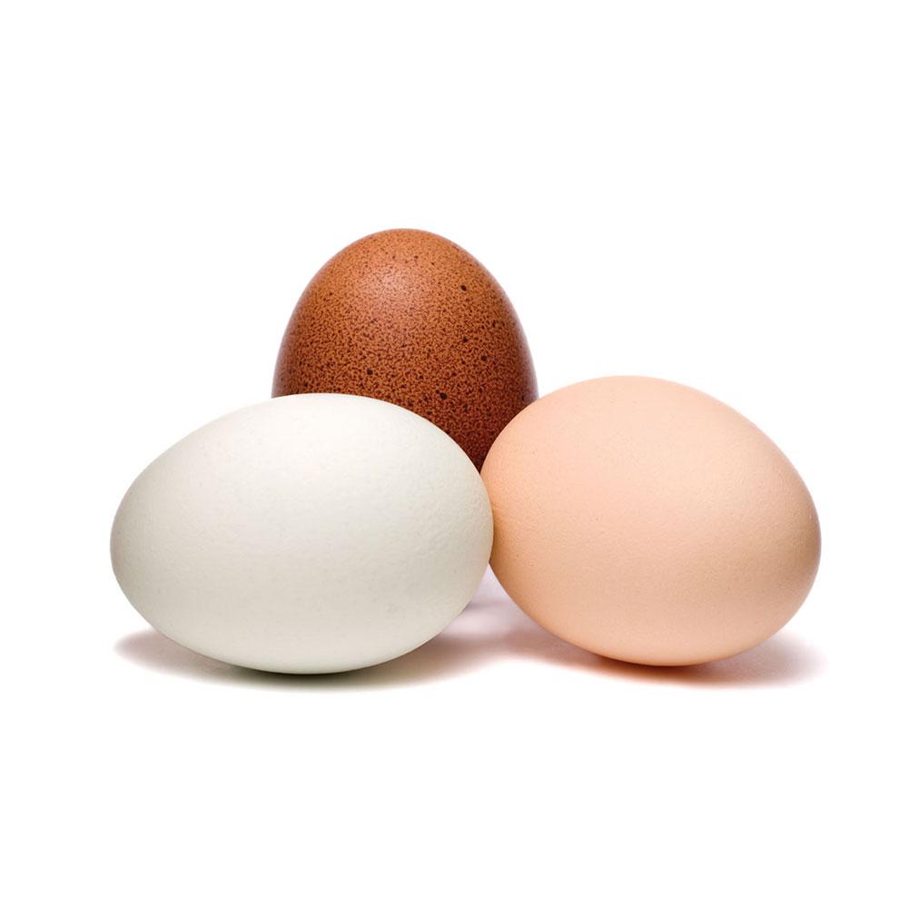 Инкубационное яйцо бройлера Росс-308, Кобб-500, Кобб-700 ...